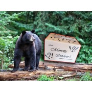 Bear 2272 surprise gift box to bait bears, grant buffet.